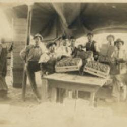 grape packing shed and workers